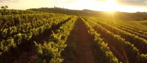 61071633-vino-istra-setnja-priroda-umag-buje-delicije-wine-and-walk